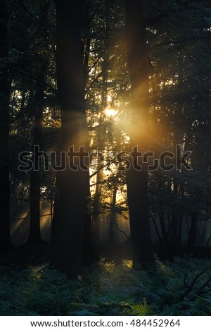 misty sunrise in the forrest