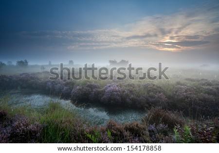 misty sunrise over swamp with flowering heather, Fochteloerveen, Netherlands - stock photo