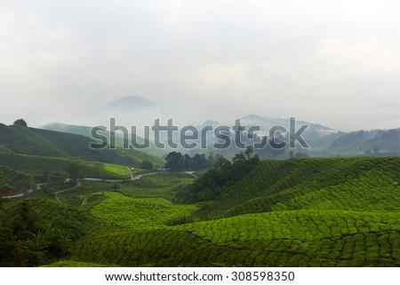 Misty Tea Garden - stock photo
