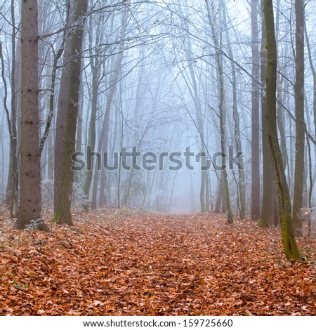 Misty trail in autumn forest - stock photo