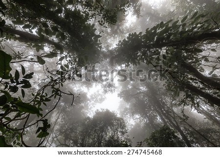Misty tropical forest in early morning, perspective view from below - stock photo