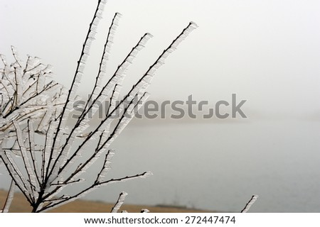 Misty Wind Creates Ice Crystals on the Branches - stock photo