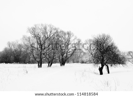 misty winter black and white foggy landscape with trees in snow and frost - stock photo