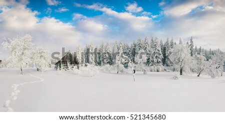 Misty winter morning in Carpathian village with snow covered trees in garden. Beautiful outdoor scene, Happy New Year celebration concept. Artistic style post processed photo.