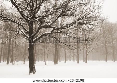 Misty winter trees landscape. Sepia toned. Retro look - stock photo