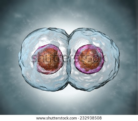 Mitosis. Stage two. Dividing human egg - stock photo