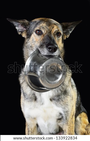 Mix breed hungry dog and the bowl - stock photo