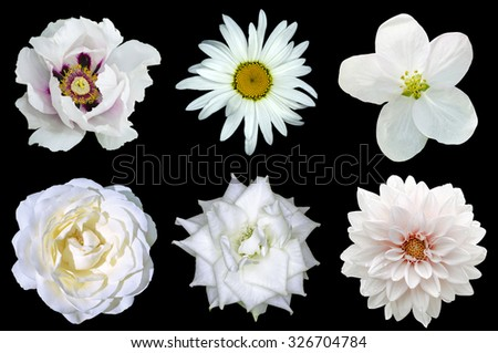 Mix collage of natural white flowers 6 in 1: peony, dahlia, roses, flax flower and daisy flower isolated on black - stock photo