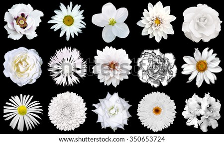Mix collage of natural white flowers 15 in 1: peony, dahlias, roses, flax flower, gerber, chrysanthemum, cornflower and daisy flower isolated on black - stock photo