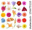 mix flowers  isolated on white background  - stock