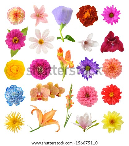 mix flowers  isolated on white background  - stock photo