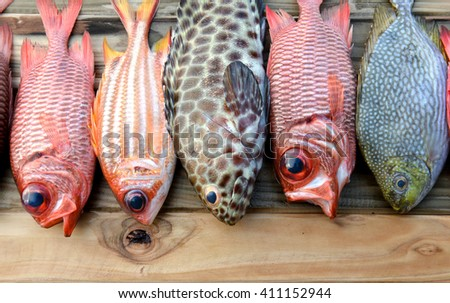 mix fresh Pinecone soldier fish and grouper fish  trevally fish for cooking from asian fishery market photo in daylight time show big eyes and pink scales - stock photo