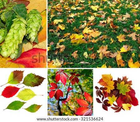 mix of different autumn photo close-up