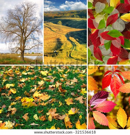 mix of different autumn photo closeup