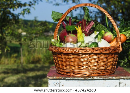 Mix of different fresh vegetables in the basket outdoors, soft focus background