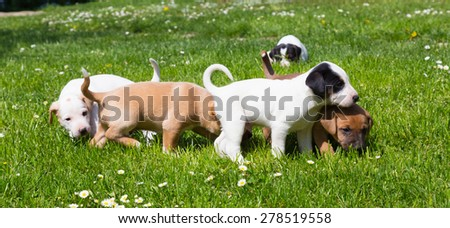 Mixed-breed adorable cute little puppies playing outdoors on a meadow on a sunny spring day. - stock photo