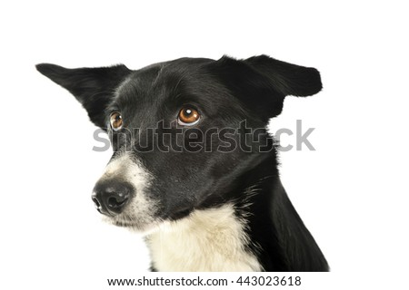 Mixed breed black dog in a white background - stock photo
