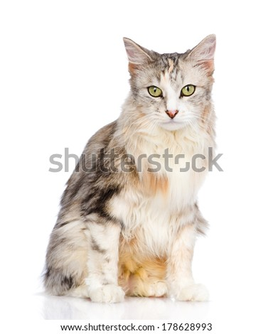 mixed breed cat looking at camera. isolated on white background