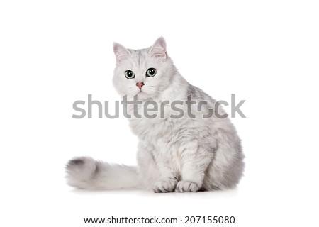 Mixed-breed cat on white - stock photo