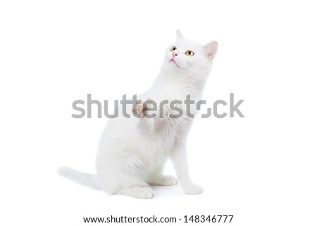 Mixed-breed cat, 4 year old, on the white background