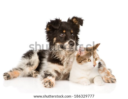 mixed breed dog and cat looking away. isolated on white background