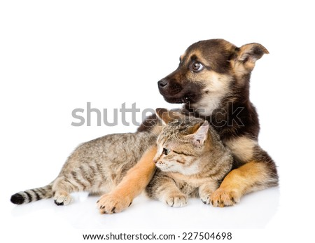 mixed breed dog embracing tabby cat and looking away. isolated on white background - stock photo