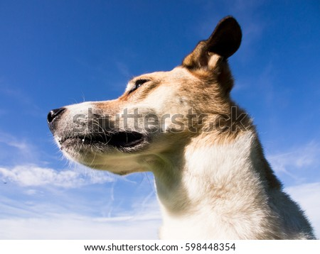 mixed breed dog, face close-up against blue sky