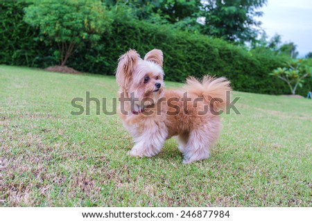 mixed breed dog get surprise in garden - stock photo