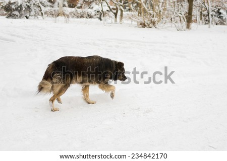 Mixed breed dog in search of everyday food - stock photo