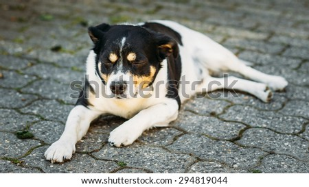 Mixed Breed Dog Is In Yard, Exhausted From Summer Heat - stock photo