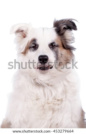 Mixed breed dog isolated on white background - stock photo