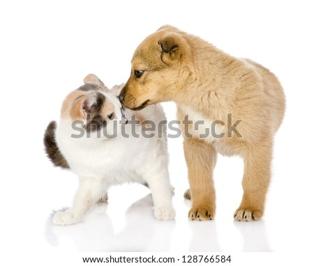 Cat Dog Breed Mix Mixed Breed Dog Kisses Cat