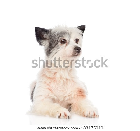 mixed breed dog looking away. isolated on white background - stock photo