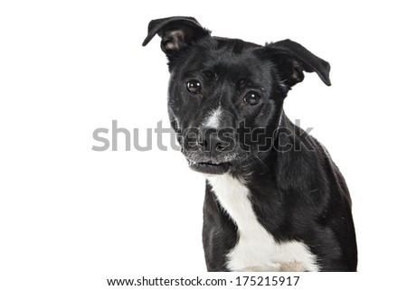 Mixed Breed Dog on white background