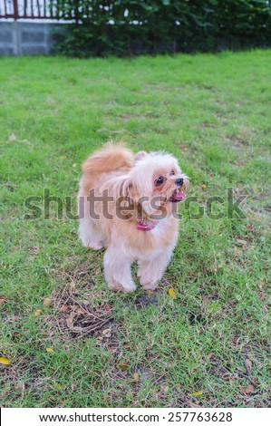 mixed breed dog playing in the field - stock photo