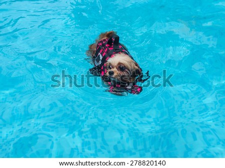 mixed breed dog playing in the swimming pool - stock photo