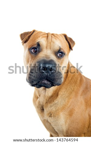Mixed breed dog portrait isolated on white background