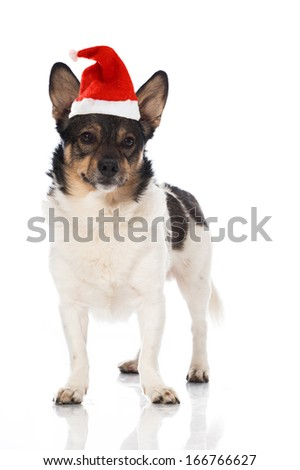 Mixed breed dog with santa claus hat isolated on white