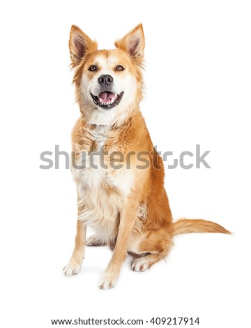 Mixed breed dog with tan color fur and big smile - stock photo