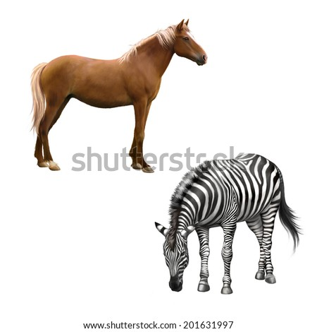 Mixed breed horse standing, zebra bent down eating grass . Vector isolated on white background