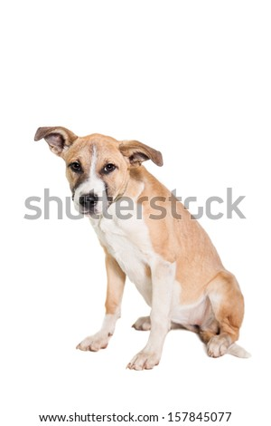 Mixed breed puppy isolated on a white background