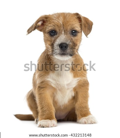 Mixed-breed puppy looking at the camera,  sitting, isolated on white - stock photo
