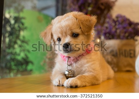 Mixed breed puppy on table. - stock photo