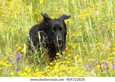 Mixed Breed Running - stock photo