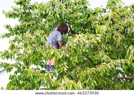 Mixed caucasian-asian boy,kid,child climbing a ladder and hand picking cherry orchard fruits from green tree, farming,pick your own fruit with blue sky background.