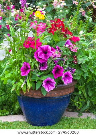 Mixed colorful flowers in a blue pot on display - stock photo