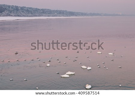 Mixed flock of waterbirds on a calm sea in winter morning