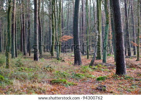 mixed forest in autumn, northern Germany - stock photo