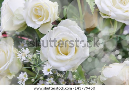 mixed of  fresh white  flower  bouquet , flower background - stock photo