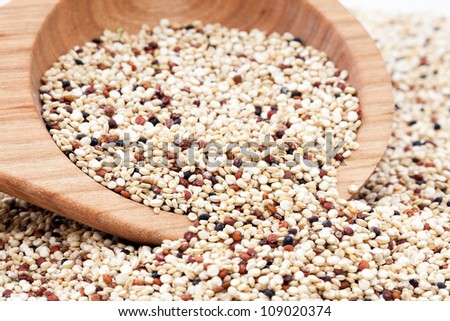Mixed Quinoa seeds spilling from a wooden spoon. - stock photo